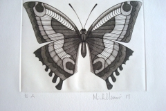 Papillon-Amynthor--210mm-X-159mm