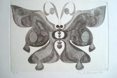 Papillon-Maia--300mm-x-210mm