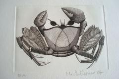 Crabe--295mm-X-215mm